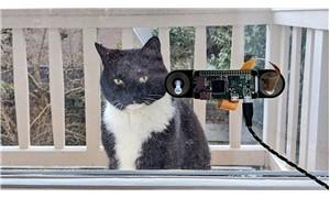 Yazılım mühendisi, kedisi için yüz tanıma sistemi geliştirdi
