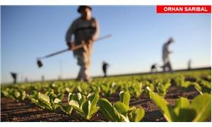 Türkiye tarımında özelleştirme
