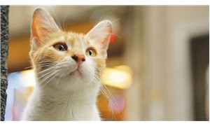 Hayvanlar için yasal düzenlemeler şart