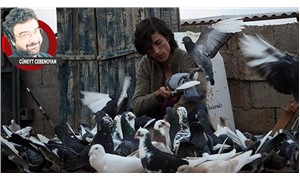 Güvercin: İnsanlar ve hayvanlara dair