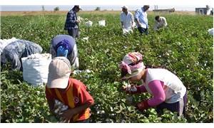 Tarımda çocuk işçiliği artıyor
