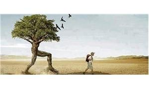 Ağaçların yürüme zamanı