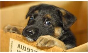 Petshoplarda kedi köpek satışını yasaklayan tasarı 2 yıldır bekliyor