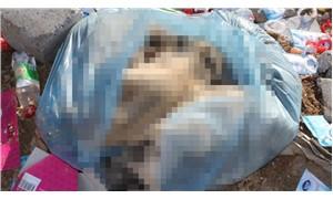 Yavru köpekleri poşete koyup öldürdüler!