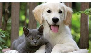 Japon uzmanlar araştırdı: Kediler de köpekler kadar akıllı