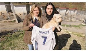 Ronaldo, imzalı formasıyla 80 köpeği kurtardı