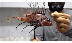 Zehirli aslan balığı için 'Lady Gaga' reçetesi