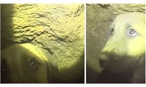 70 metrelik kuyuya düşen köpek 10 gündür mahsur