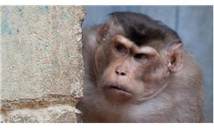 Hayvanların kitlesel kavgaya nasıl dahil olduğu tespit edildi