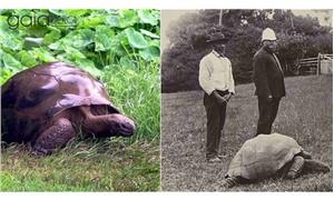 Gezegenimizin en yaşlısı: 182 yaşındaki dev kaplumbağa Jonathan
