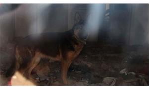 Sahibi tarafından köhne binada kilitli tutulan köpek kurtarıldı