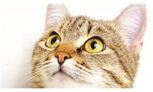 Ev kedilerinde yüksek miktarda kimyasal bulundu