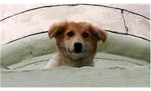 Minarede mahsur kalan köpek kurtarıldı