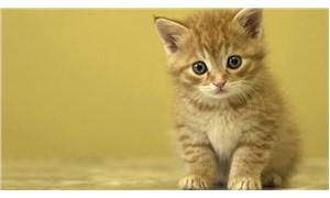 Şikâyetinden kedilere mama alınması şartıyla vazgeçti