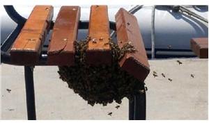2 bin bal arısı bankı istila etti