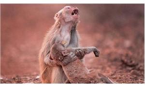 Anne maymun, yavrusu için gözyaşı döktü