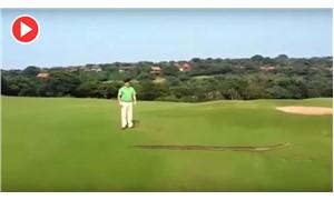 Görenler inanamadı: Dev piton golf sahasında belirdi