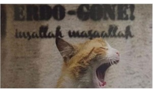 Kedi fotoğrafı yüzünden dergiyi kapattılar: Erdo-Gone inşallah maşallah