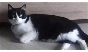 Komşuya kaçan kedinin kiminle yaşayacağına mahkeme karar verdi