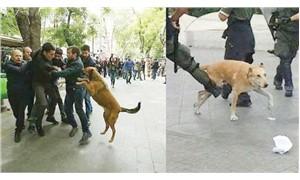 Paramparça 'ülkeler' ve köpekler