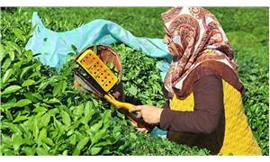 Yaş çay fiyatı 2 lira 13 kuruş