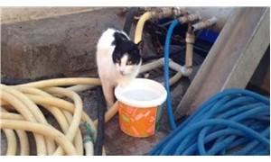 İskelede 2 gün mahsur kalan 'Altay' kedi kurtarıldı