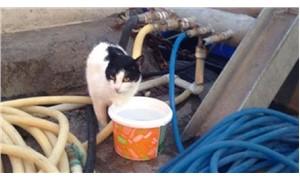 İskelede mahsur kalan 'Altay' kedi kurtarıldı
