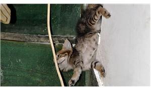 Tavan boşluğunda sıkışan yavru kediyi itfaiye kurtardı
