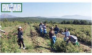 Köy köy dolaşan gençler  yeni yaşamın tohumlarını ekiyor
