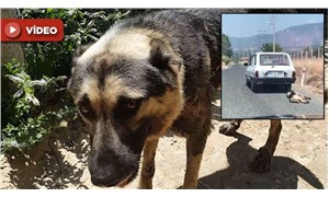 Aracın arkasında sürüklenen köpeğin durumu iyiye gidiyor