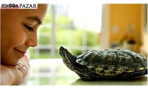 Haftanın Öyküsü: Kaplumbağa
