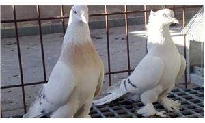 Güvercin yüzünden arkadaşının boğazını kesti