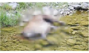 Boynuzları için koruma altındaki 4 kızıl geyiği katlettiler