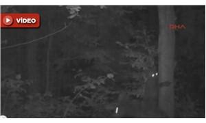 Yavru ayı, annesinden ağaca tırmanmasını öğrenirken fotokapanla görüntülendi