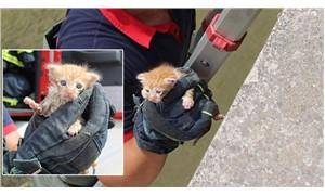 Dereye düşen yavru kedi kurtarıldı