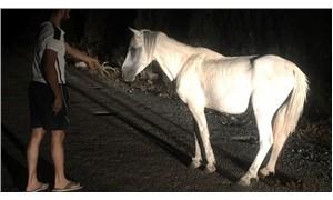 Ormanda ön ayakları iple birbirine bağlı bulunan atı kurtardılar