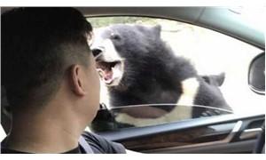 Güvenlik uyarılarını dinlemeyen şahsı arabasında ayı ısırdı