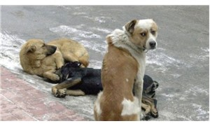 Köpekleri antidepresanla zehirlediler!