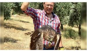 Tavuklarını yiyen şahini yakaladı, 3 gün sonra bıraktı