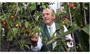 İBB Başkanı Topbaş: Şehirde yaşayanlar, özellikle de çocuklar ağaçları bilmiyor