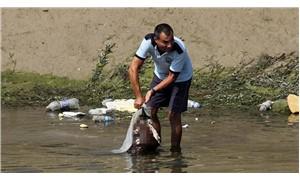 Sulama kanalında at ve eşek kemikleri bulundu