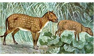 Daha önce birçok tırnağı olan atlar, nasıl tek tırnağa evrildi?