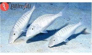 İklim değişikliği balıkların boyutunu küçültüyor