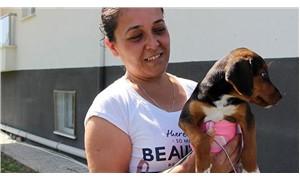 Sokakta bulduğu felçli yavru köpeği yaşattı