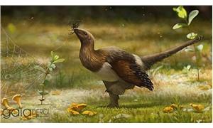 """""""Silky"""", uçamayan dört kanatlı dinozor"""