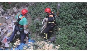 Köpeğe işkence yapıp, 20 metre yükseklikten attılar