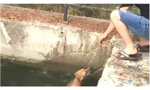 Nehredüşen köpeği yurttaşlar kurtardı