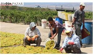 Üzüm üreticisini üzen tarım politikaları