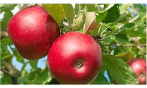 'Elma kabuğundaki kimyasallar, yıkansa dahi geçmiyor'