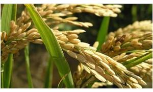 50.400 ton pirinç alımı için uluslararası ihale